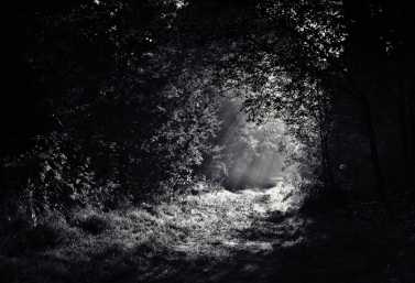black-and-white-forest-light